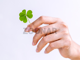 The girl holding Clovers leaves on white background. The symbolic of Clover the first is for faith, the second is for hope, the third is for love.