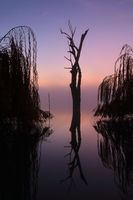 Foggy silhouetted trees on he lake at sunrise