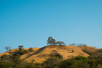 dry hills with trees and blue sky - scenic landscape