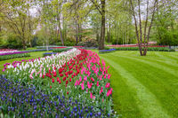 Spring tulip field in garden, Amsterdam, Netherlands