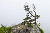 Lonely tree, Lagonaki, Caucasus, Russia
