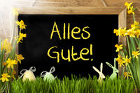 Sunny Narcissus, Easter Egg, Bunny, Alles Gute Means Best Wishes