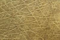 detailed african elephant pelt texture