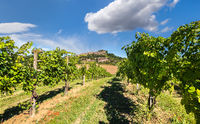 Vineyards of Langhe, Piedmont.