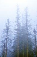 Nebel im Hochwald.jpg