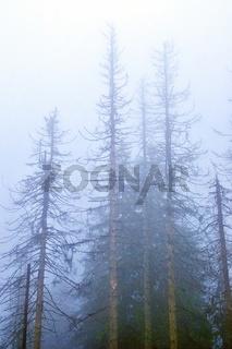 Nebel im Hochwald