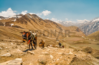 Horses walking uphill
