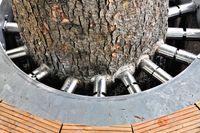 Stahlschrauben im Baumstamm