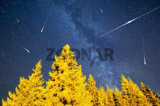 Falling stars pine trees Milky Way