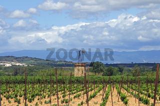 Weinanbaugebiet in Suedfrankreich