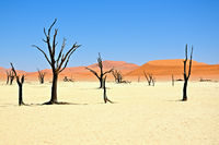 die toten Bäume vom Deadvlei Namibia
