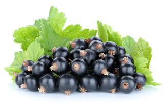 Schwarze Johannisbeeren Johannisbeere Früchte Beeren Obst Freisteller