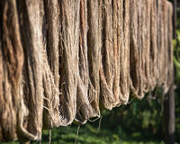 silk is dried in the sun
