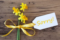 Yellow Spring Narcissus, Label, Text Sorry