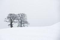 Zwei kahle Bäume in Winterlandschaft