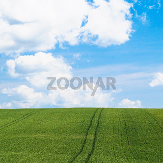 green cereal field under blue sky in Picardy