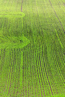 Greenish sow field with row of patterns