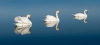 Swan Lake - Schwanensee
