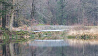 Bridge over a lake in the forest