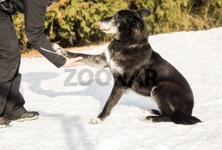 Human hand and a dog in the snow