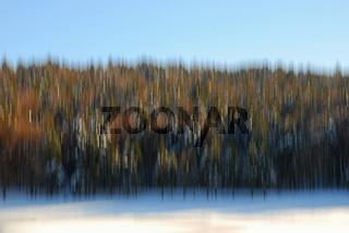 Winterlicher Wald - abstrakt