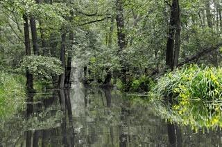 an der Hauptspree beim E-Kanal im Spreewald Deutschland