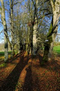 Lindenallee Fuerstlicher Park Inzigkofen im Naturpark Obere Donau