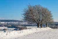 Snowy rural winter landscape with trees