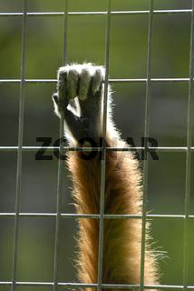 Tiere hinter Gittern