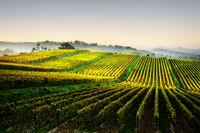 Chianti-Weinlandschaft bei Lilliano, Toskana, Italien