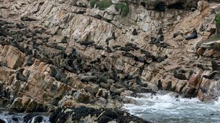 Startrampe Seehundkolonie, Plettenberg Bay, Suedafrika