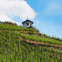 Weinhang bei Bernkastel-Kues an der Mosel