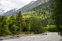 Mixed forest on the bank of a mountain river against the background of the Caucasus Mountains