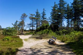 Waldweg Amrum