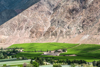 Vineyards of Elqui Valley, Andes part of Atacama Desert in the Coquimbo region, Chile