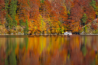 Autumn forest reflected in the Alpsee lake