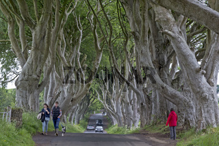 Buchenallee, The Dark Hedges, Ballymoney, County Antrim, Nordirland, Großbritannien, Europa