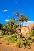 a tree in the monument valley