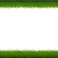 Green Grass Border Isolated
