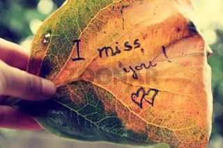 i miss you on old leaf