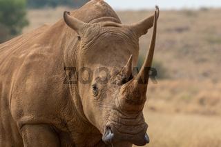 White Rhino South Africa