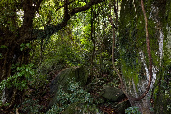 Inside the atlantic rainforest