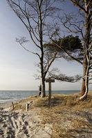 Weststrand_Fischland-Darss_2011-04_5.jpg