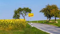 Landstraße nach Wehlen mit Sonnenblumen