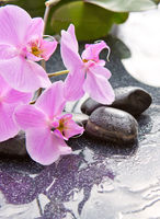 Spa stones and pink orchid on gray background.