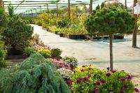 Garden market outdoor