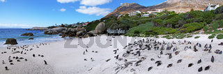 Brillenpinguine, Boulders Beach, Südafrika, African penguins, Boulders Beach, South Africa