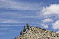 Baumtrio auf Gletschermoräne