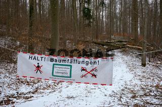 Baumfaellung im Forst
