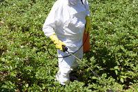 Pesticide spraying. Non-organic vegetables.